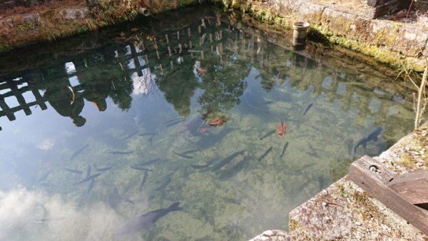 英彦山神宮社務所前の池